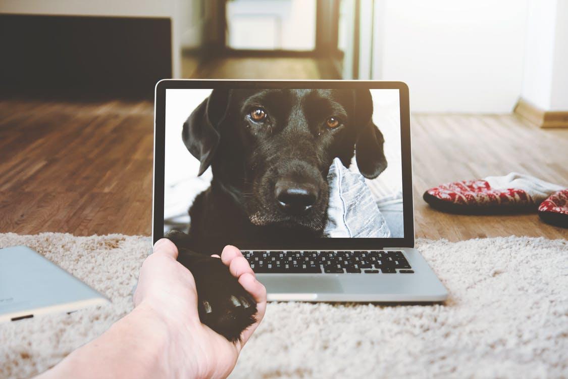 Como a Impressão 3D pode salvar a vida de animais?